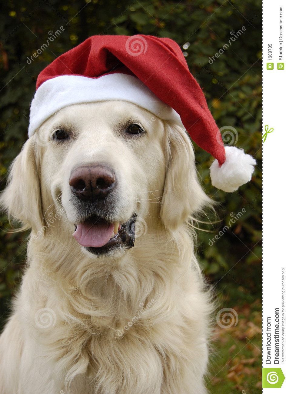 Santas Dog Stock Image Image Of Jolly Vertical