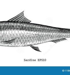 fish vintage stock illustrations 26 492 fish vintage stock illustrations vectors clipart dreamstime [ 1300 x 652 Pixel ]