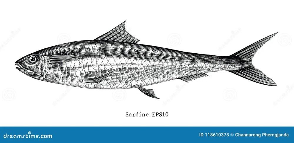 medium resolution of fish vintage stock illustrations 26 492 fish vintage stock illustrations vectors clipart dreamstime