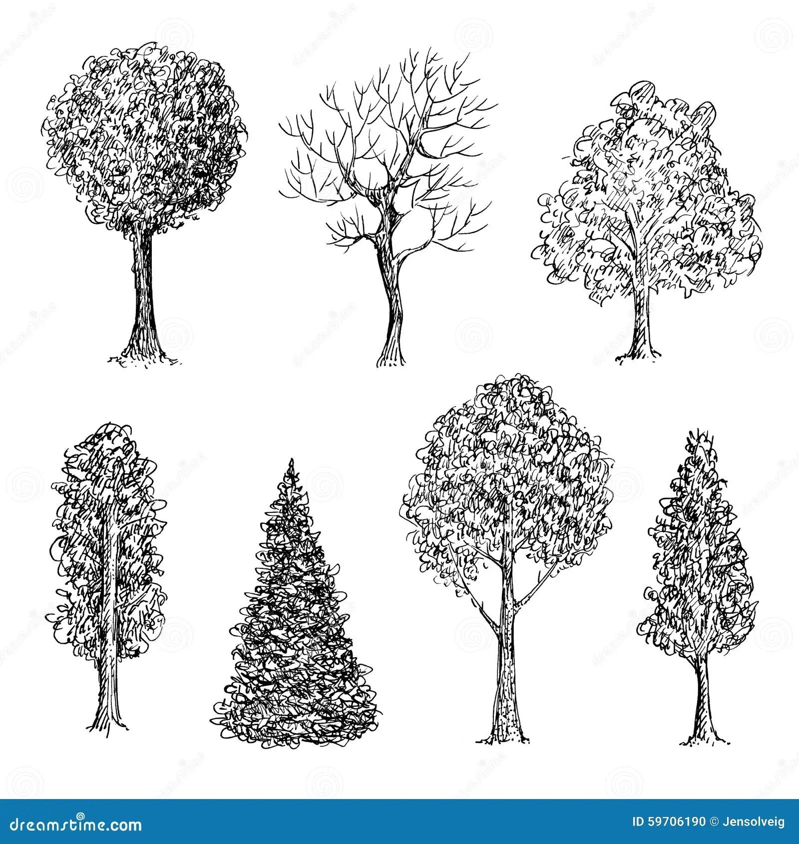 Satz Tintenhand Gezeichnete Schwarzweiss Baume Vektor