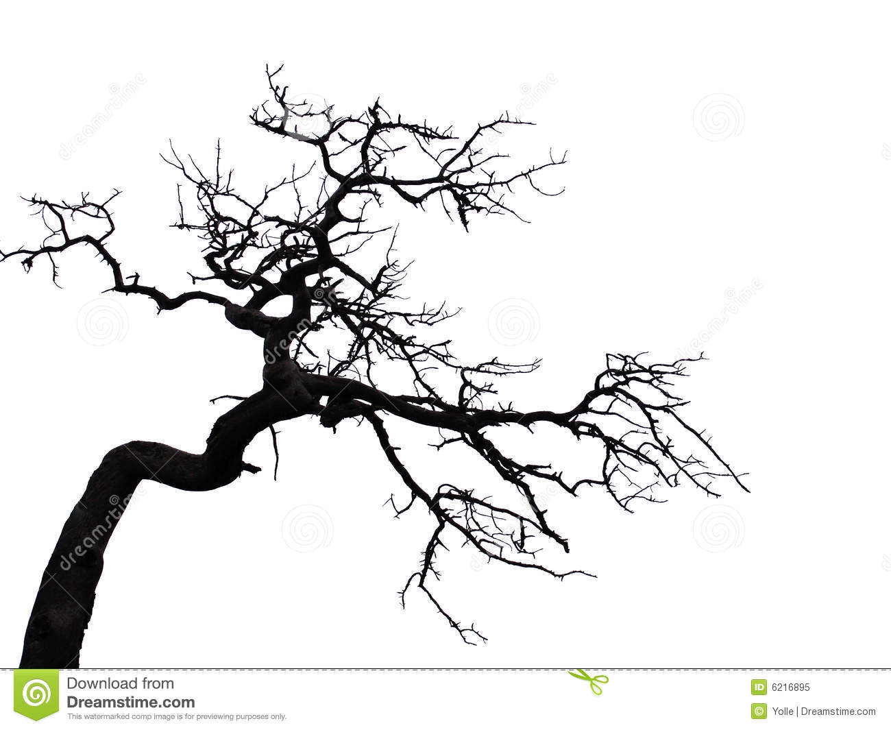 scary tree stock image