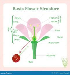 basic flower diagram wiring diagram expert basic parts of a flower diagram basic flower diagram [ 1300 x 1390 Pixel ]