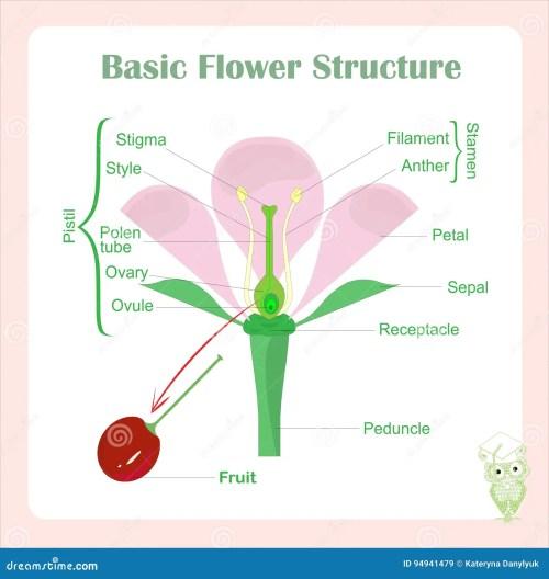 small resolution of basic flower diagram wiring diagram expert basic parts of a flower diagram basic flower diagram