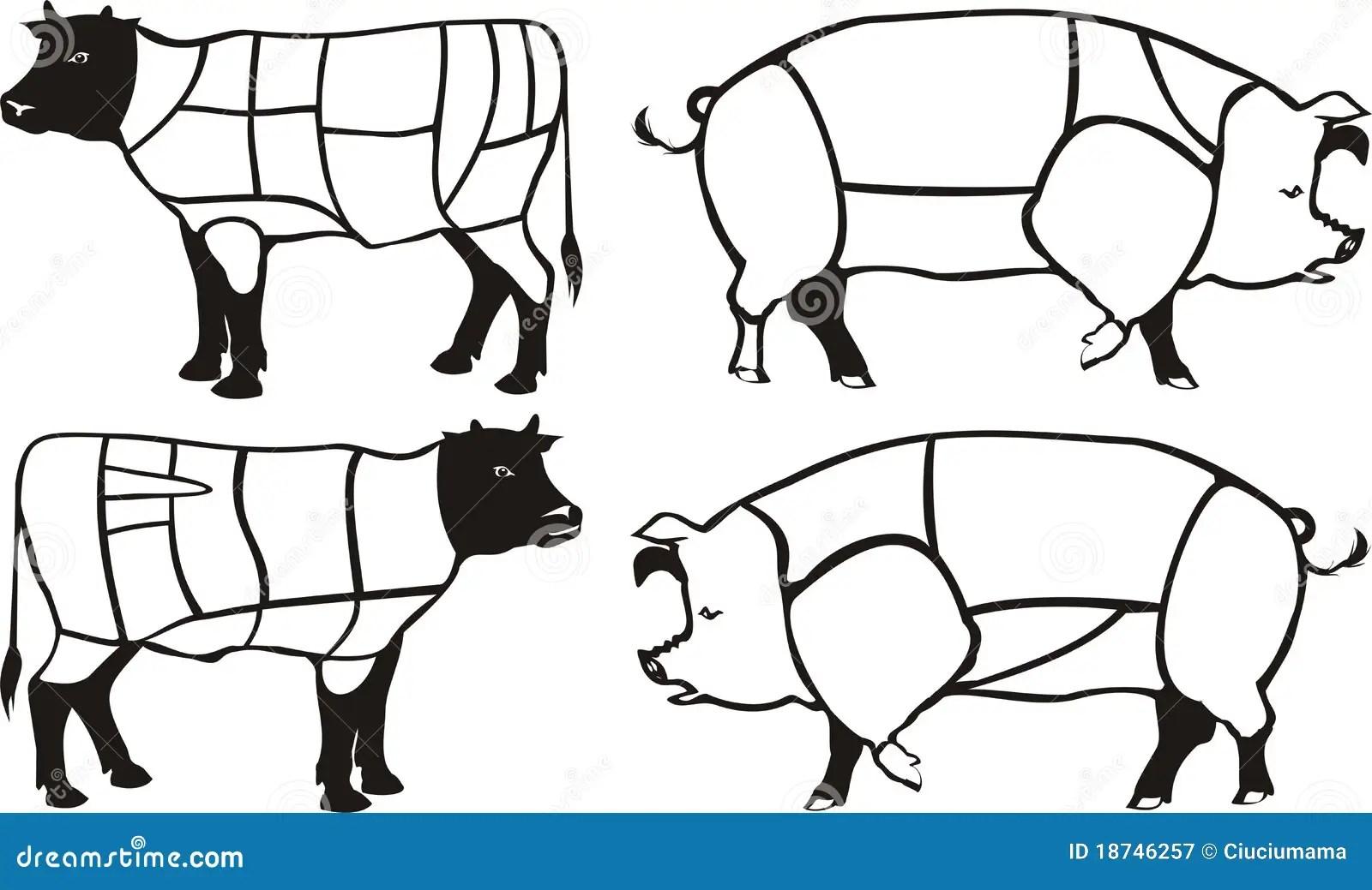 Schemi Del Manzo Amp Del Porco Illustrazione Vettoriale