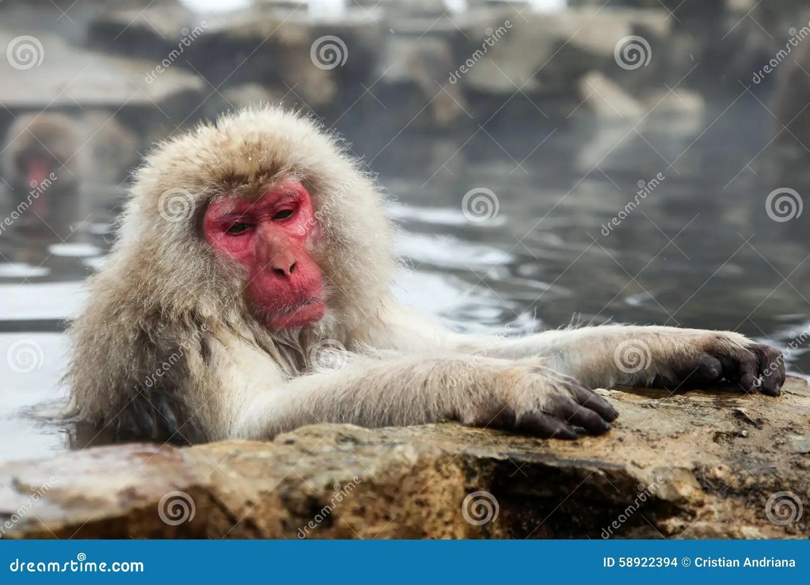 Scimmia Della Neve Macaco Che Bagna Nella Sorgente Di Acqua Calda Prefettura Di Nagano