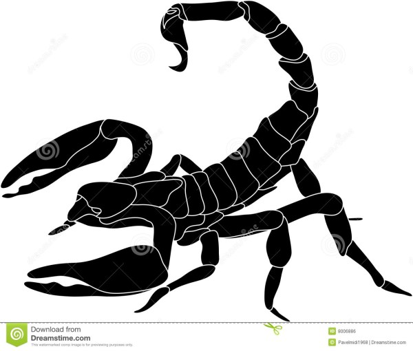 scorpion stock vector. of