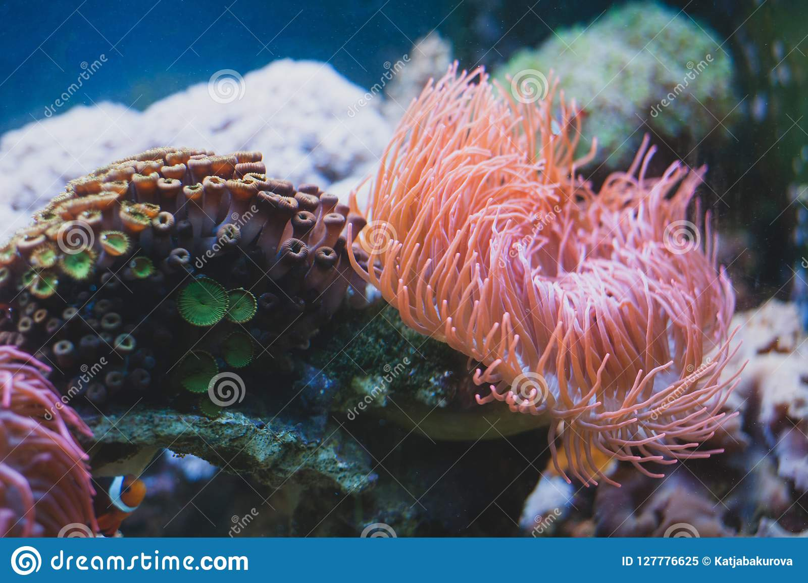 sea anemone and in