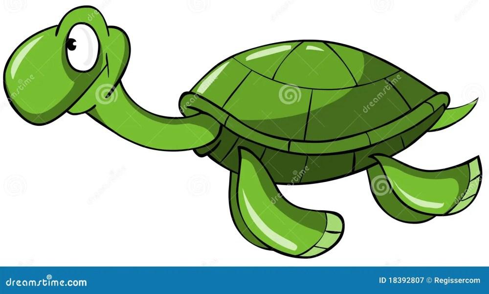 medium resolution of sea turtle
