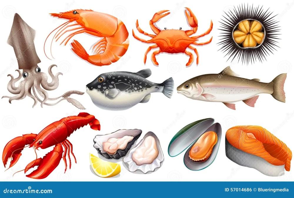 medium resolution of seafood