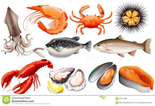 small resolution of seafood