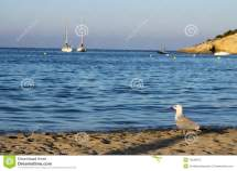 Seagull Beach Royalty Free Stock