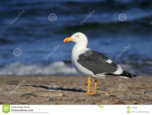Seagull Beach Royalty Free Stock - 2197985