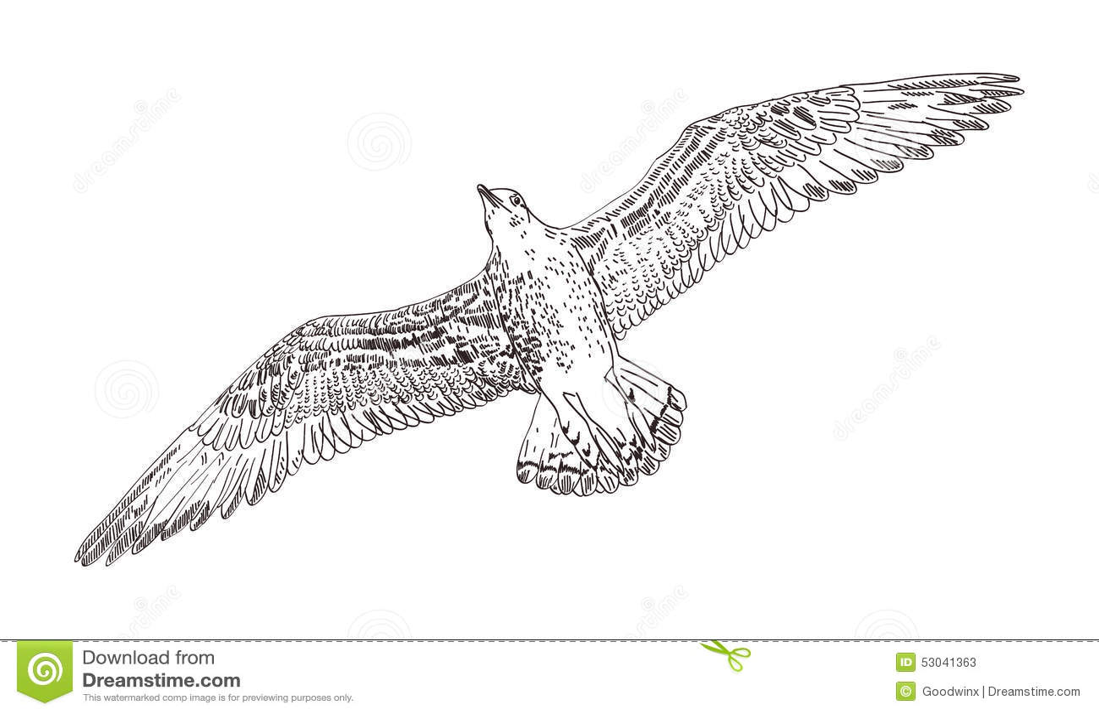 Seagull Vector Stock Vector