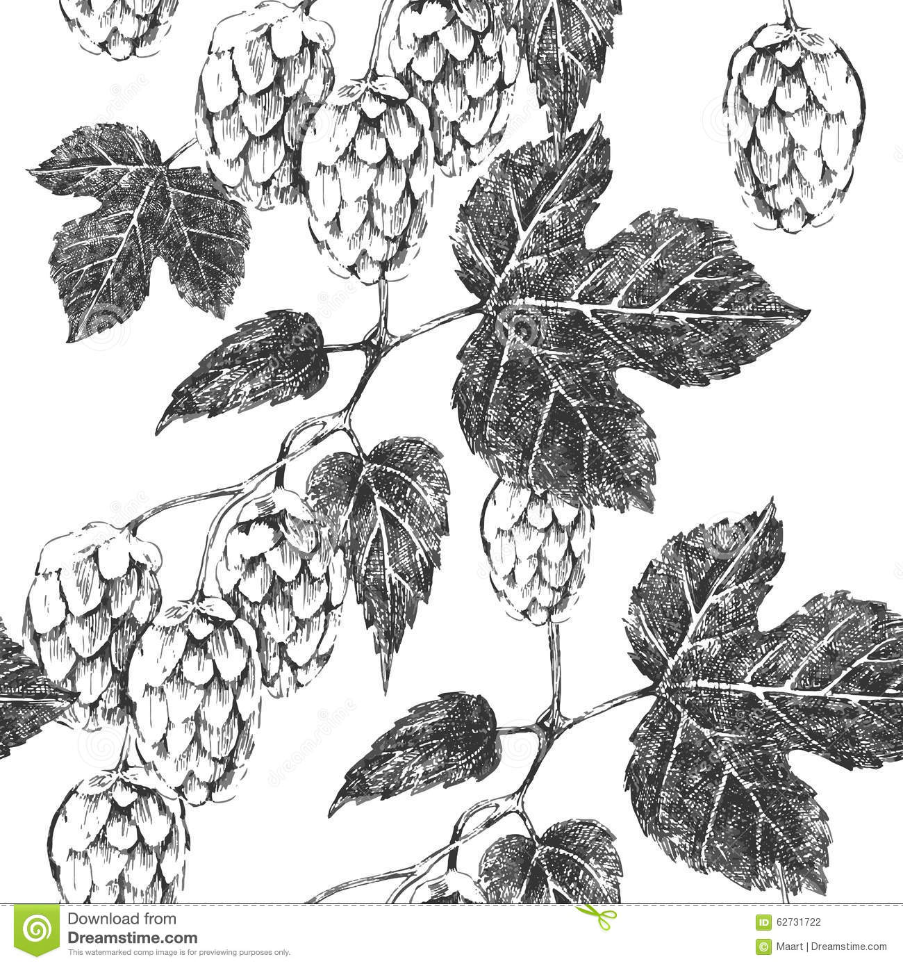 Seamless pattern with hop stock vector. Image of botanical