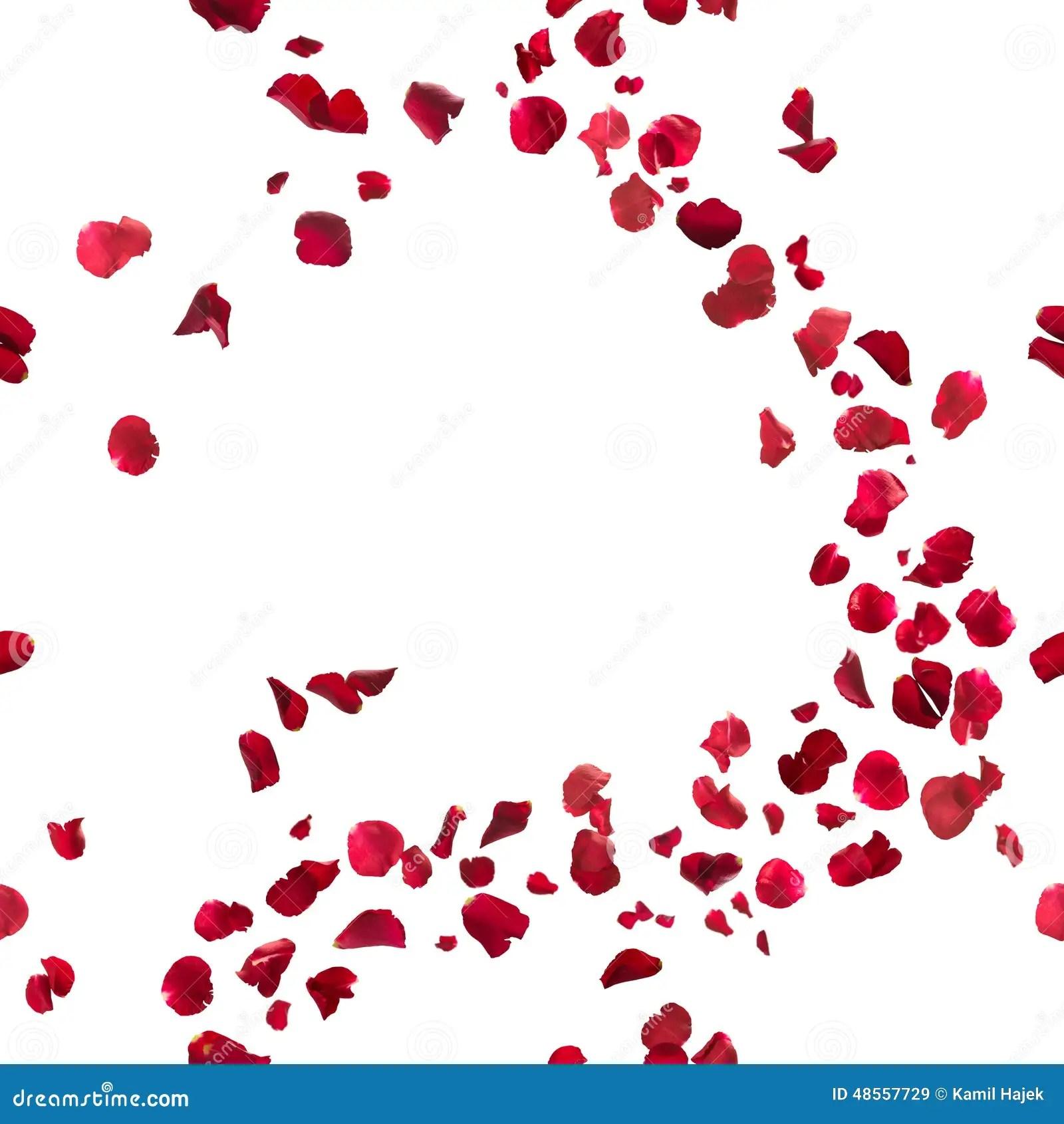 Falling Rose Petals Wallpaper Seamless Red Rose Petals Breeze Stock Photo Image 48557729