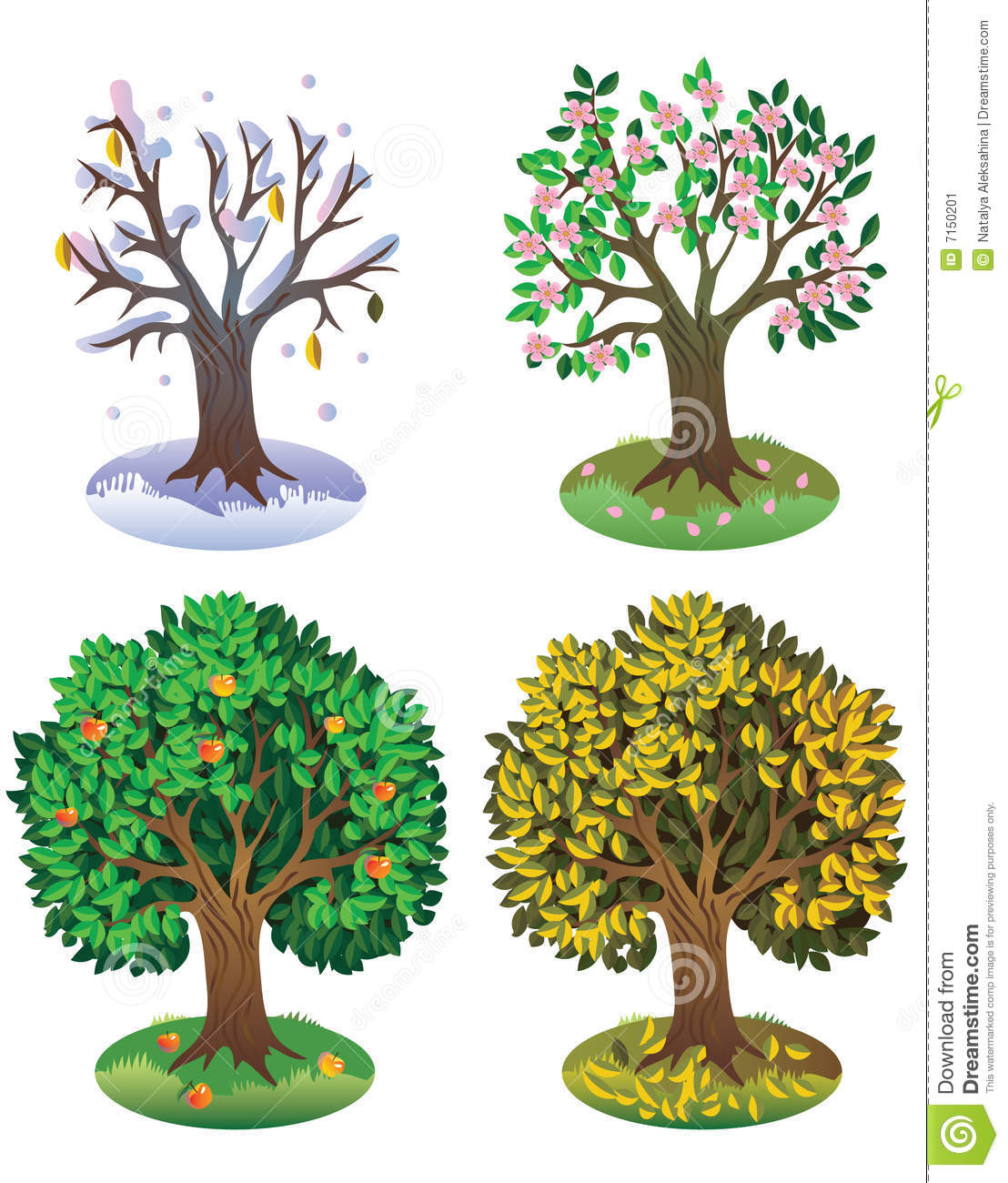 Apple Tree At Different Seasons Vector Illustration