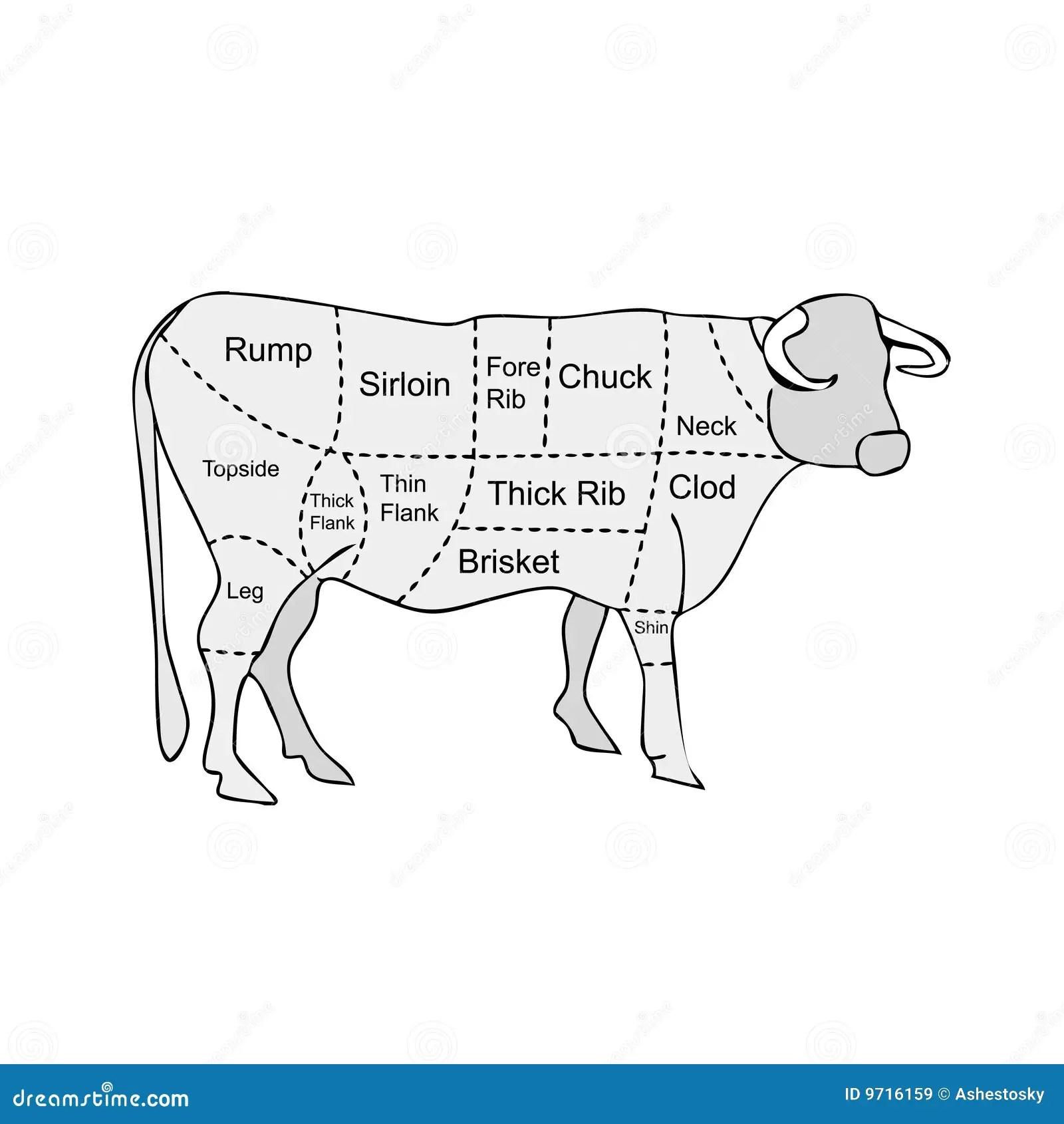 Sections De Viande De Boucherie De Vache Illustration De