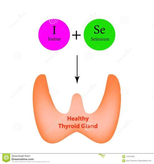 small resolution of selenium and iodine are necessary for the normal functioning of the thyroid gland infographics
