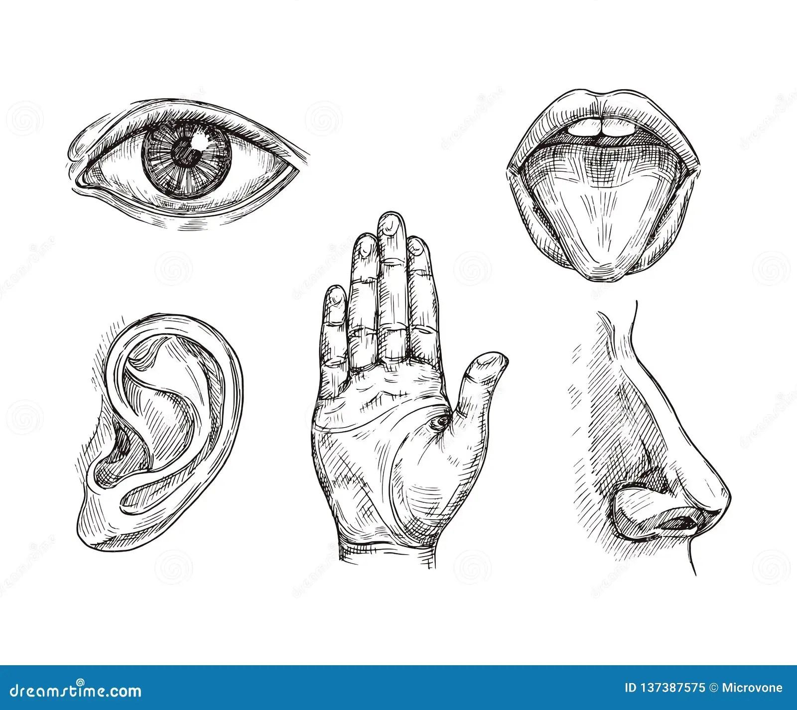 Sense Organs Hand Drawn Mouth And Tongue Eye Nose Ear