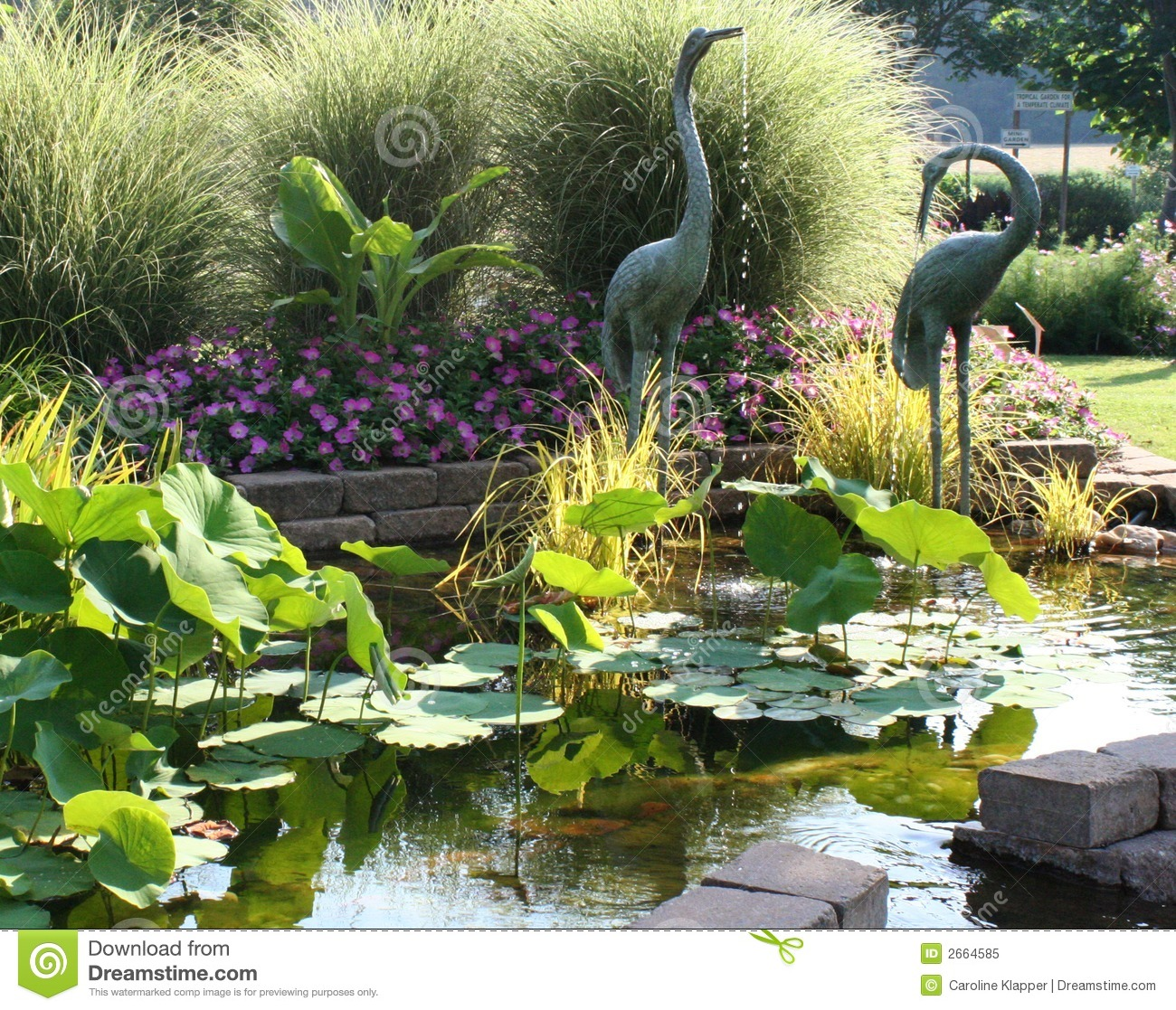 Serene Pond Garden Royalty Free Stock Photo  Image 2664585