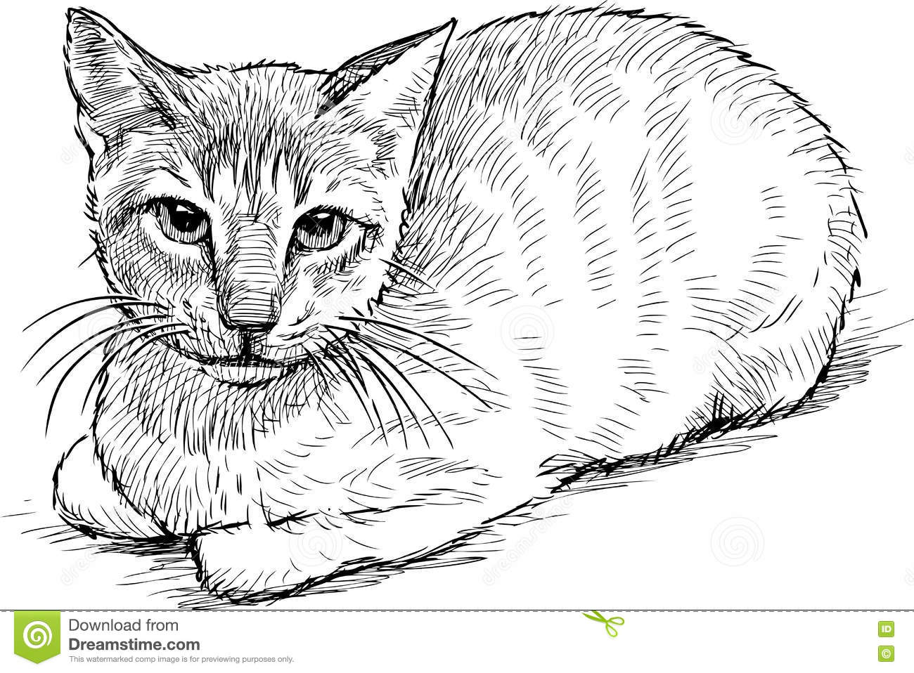 Serious house cat stock vector. Image of looking, drawn