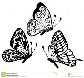 butterfly isolated royalty