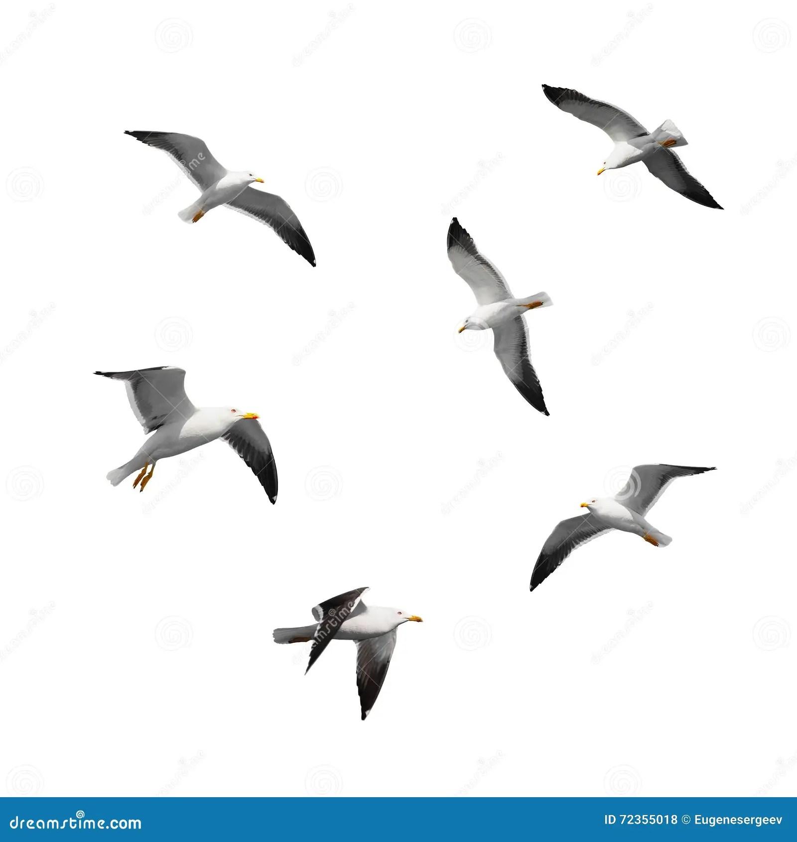 Set Of Big Flying Seagulls Isolated On White Stock Photo