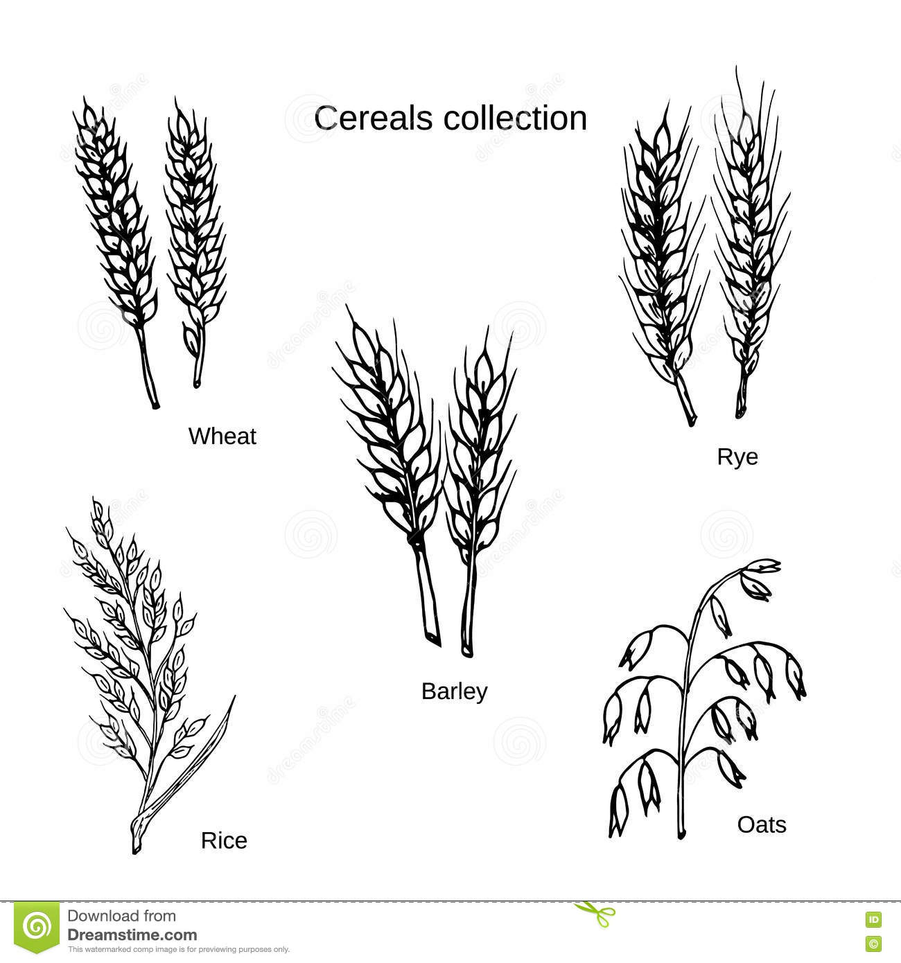 Barley Cartoons Illustrations Amp Vector Stock Images