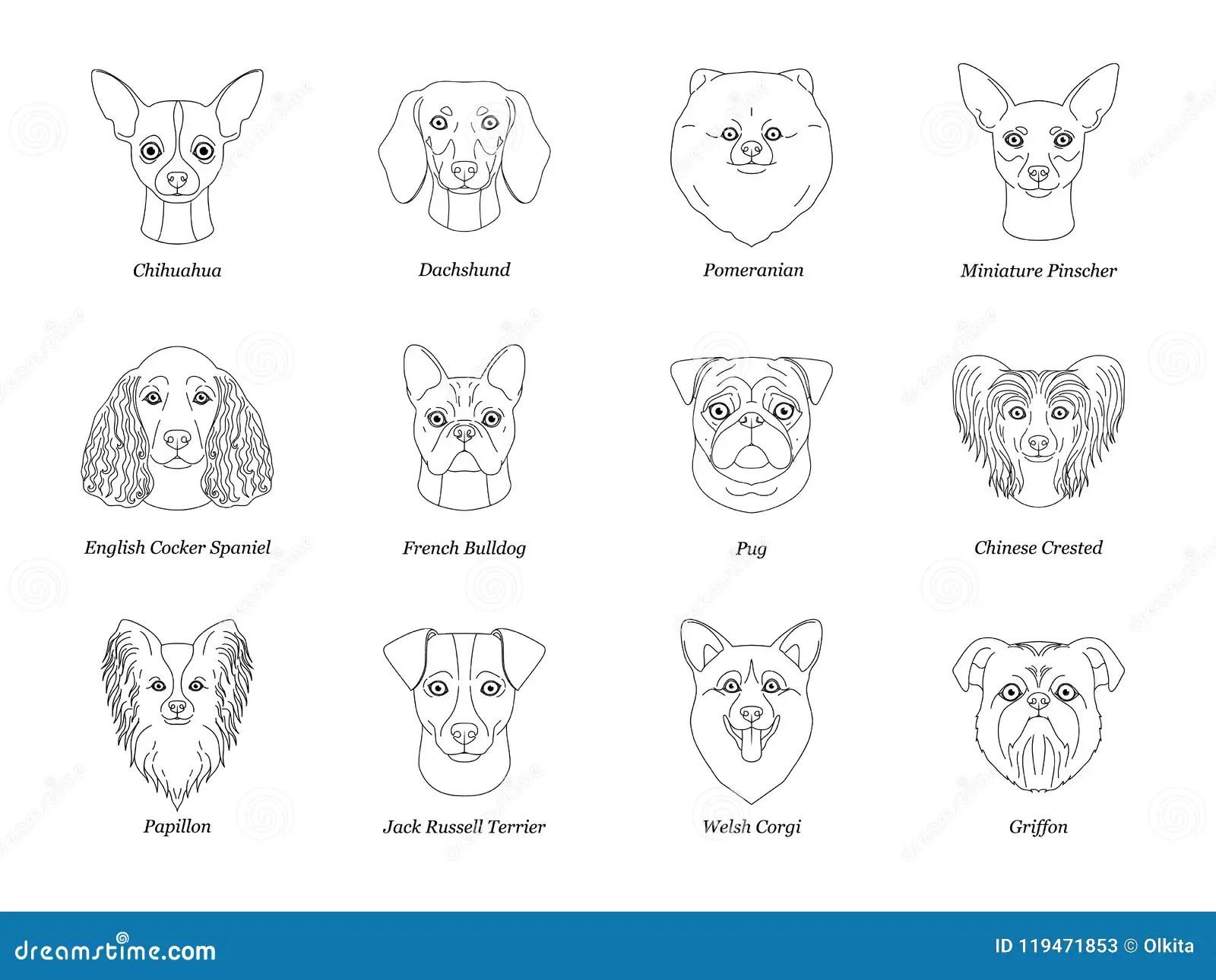 English Bulldog Dog Cartoon Illustration Cartoon Vector
