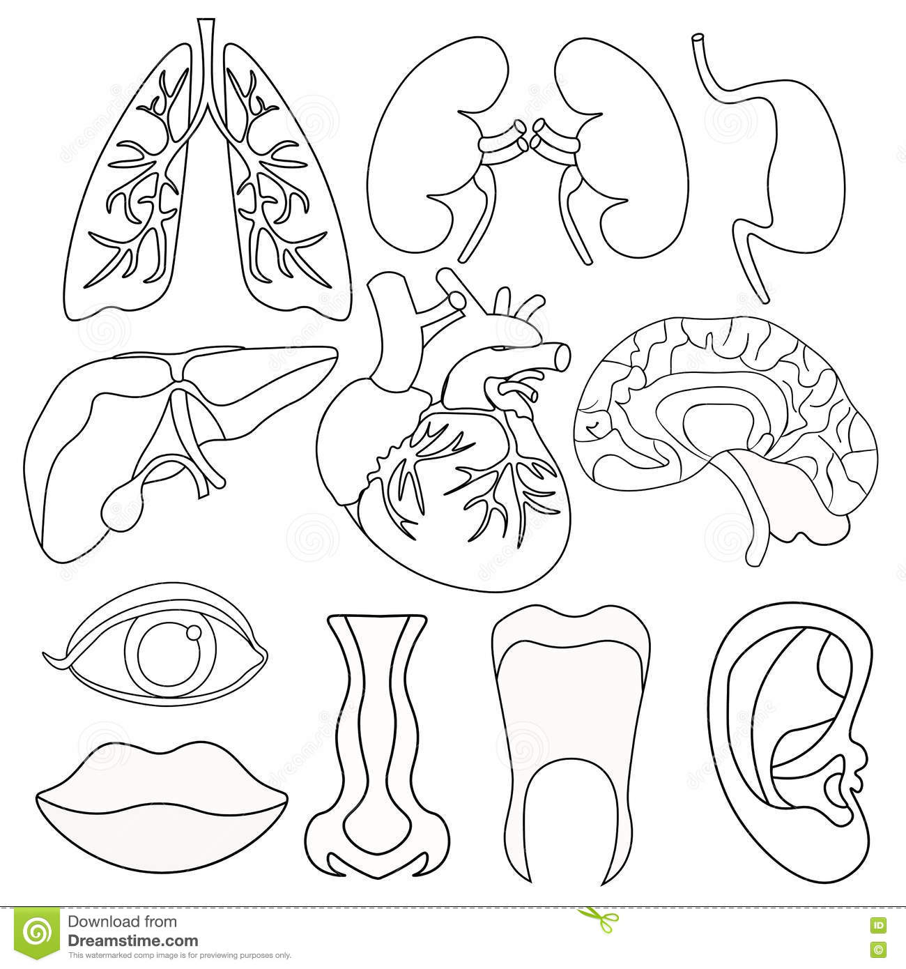Set Of Coloring Human Organs Inside The Body And Face