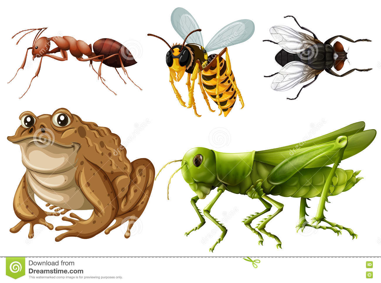 Set Of Different Kinds Of Insects Stock Vector