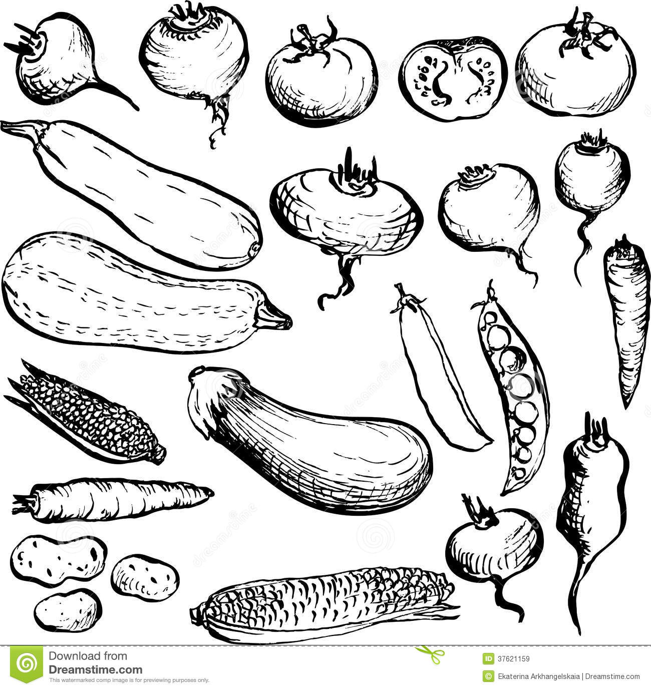 Set Of Drawing Vegetables Royalty Free Stock Images