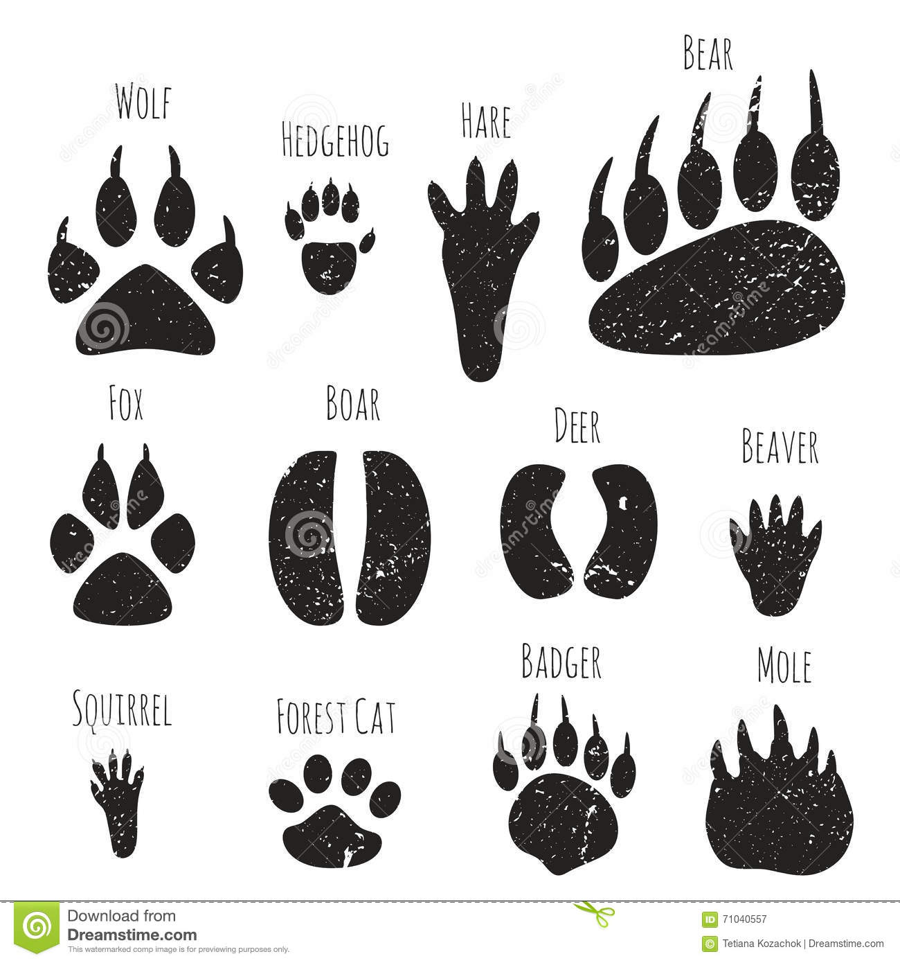 Set Of Forest Animals Footprints Stock Vector