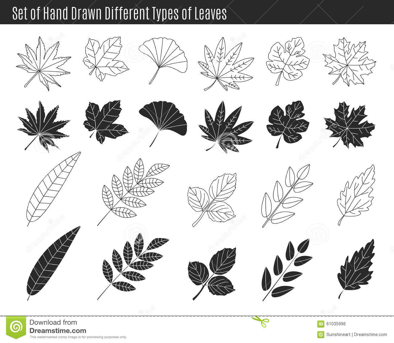 Set Of Hand Drawn Different Types Of Leaves Stock Vector