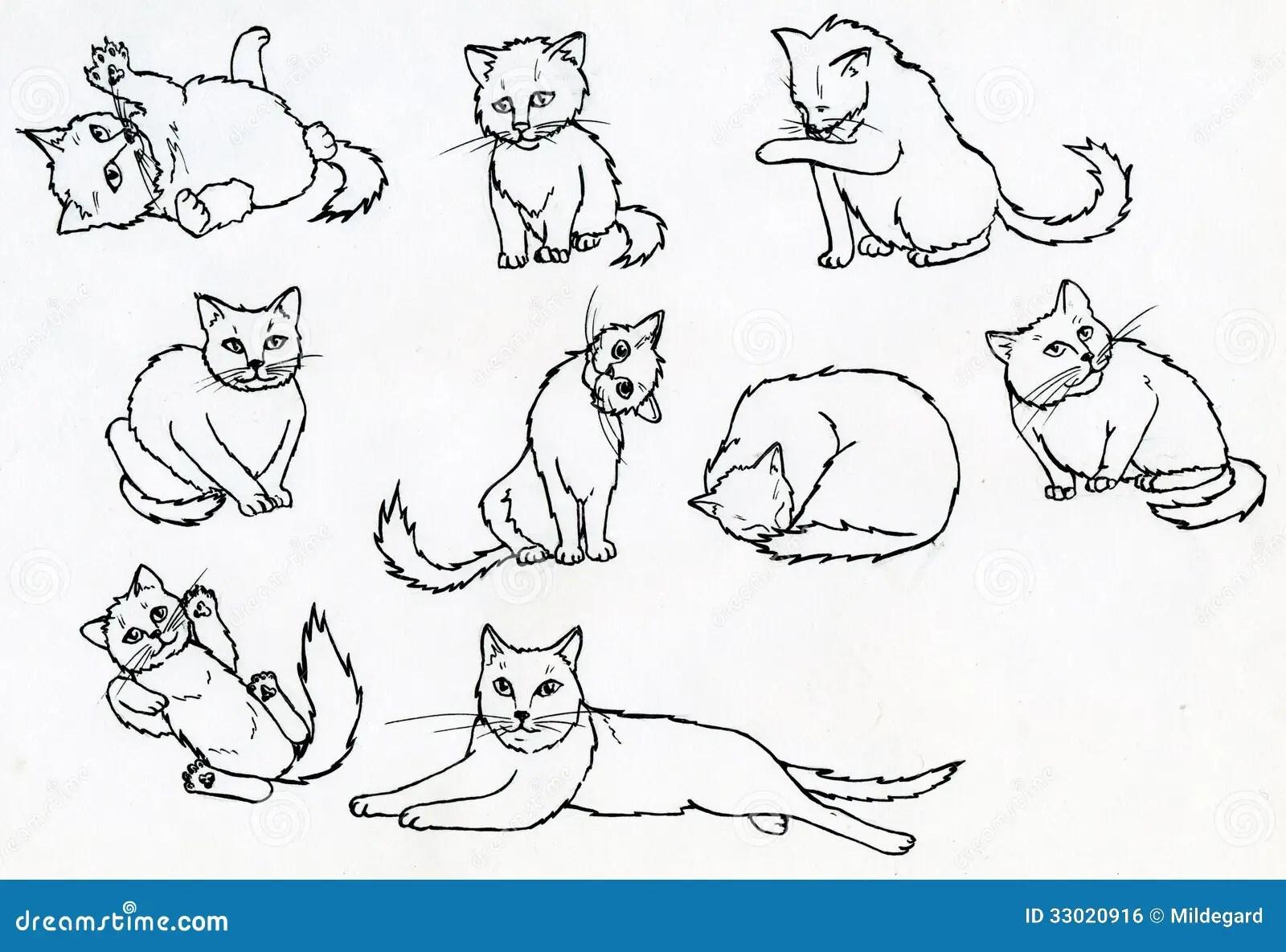 Set Of Ink Drawn Cats Stock Illustration Illustration Of