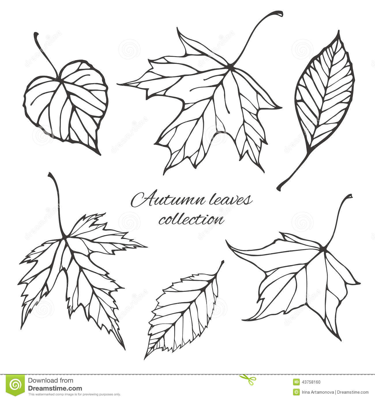 Set Of Outline Autumn Leaves Stock Vector