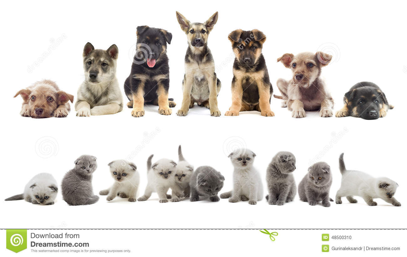 set of puppy and