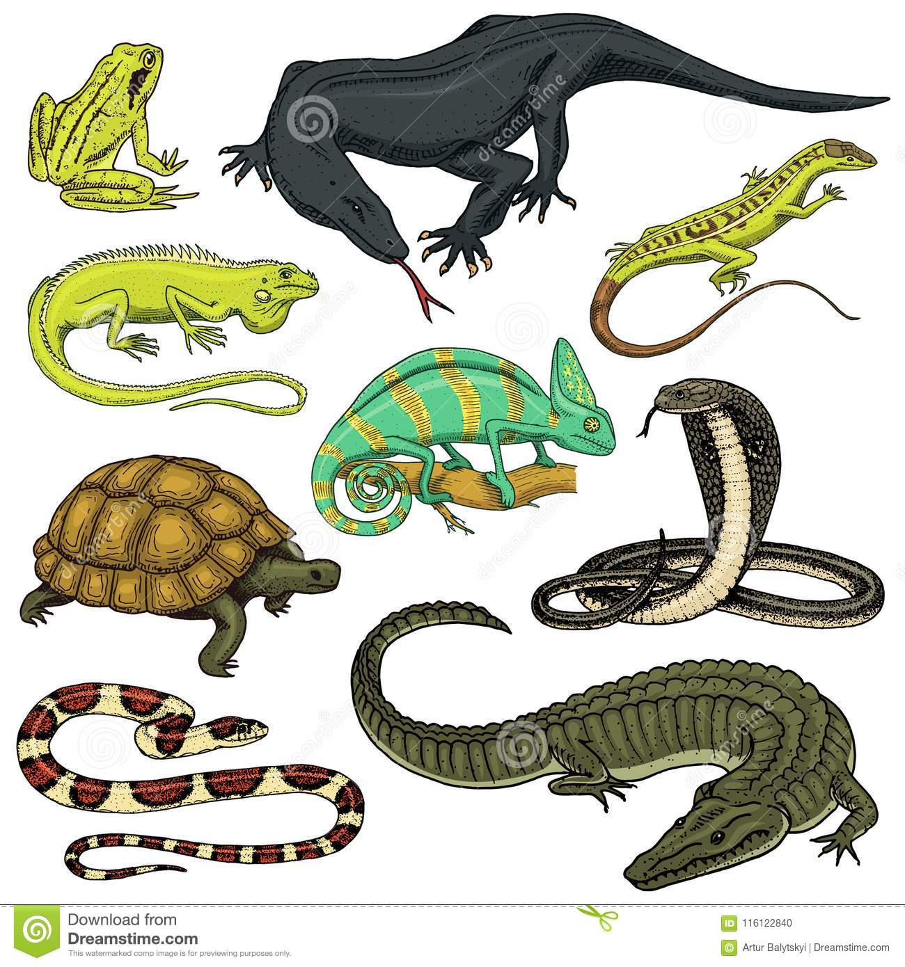 Set Of Reptiles And Amphibians Wild Crocodile Alligator
