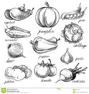vegetables sketches hand drawn vegetable drawing doodles sketch various different simple kinds fruit vector rough illustration pen
