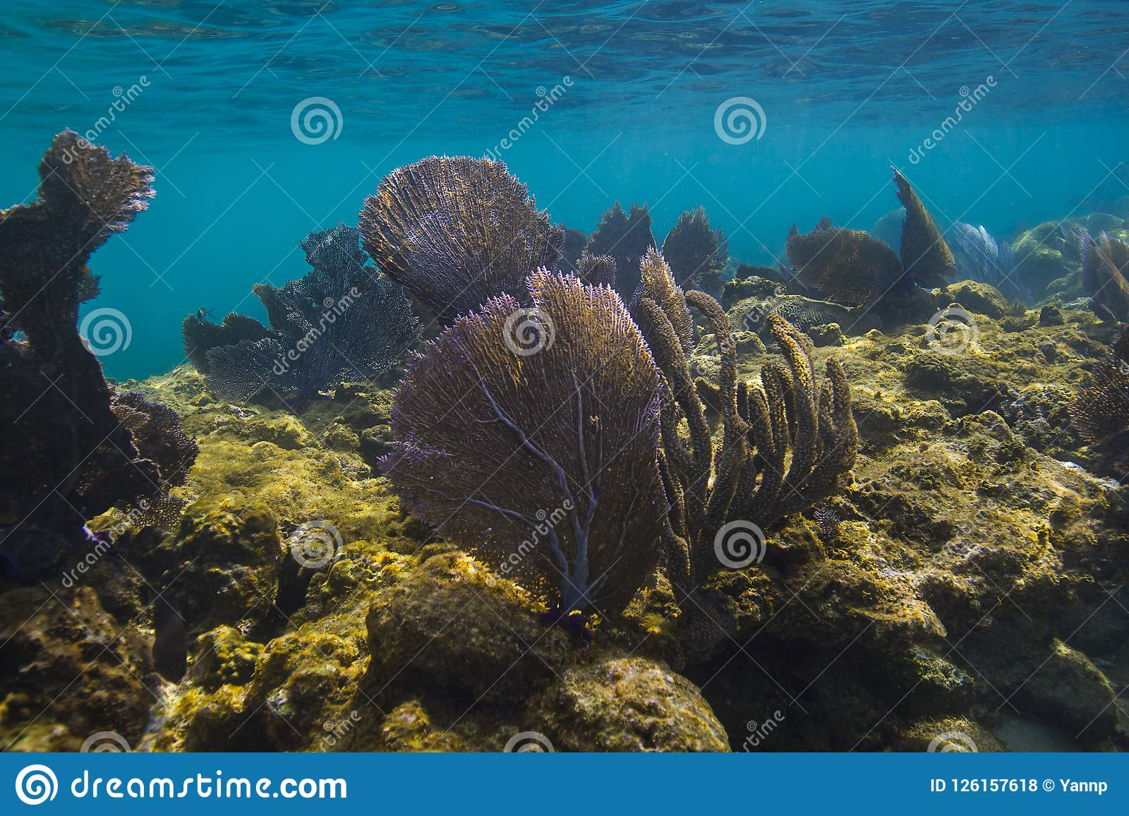 Roatan Coral Reef Stock Photo Image Of Caribbean Animal