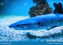Shark Closeup Stock Of Killer Hunter Blue