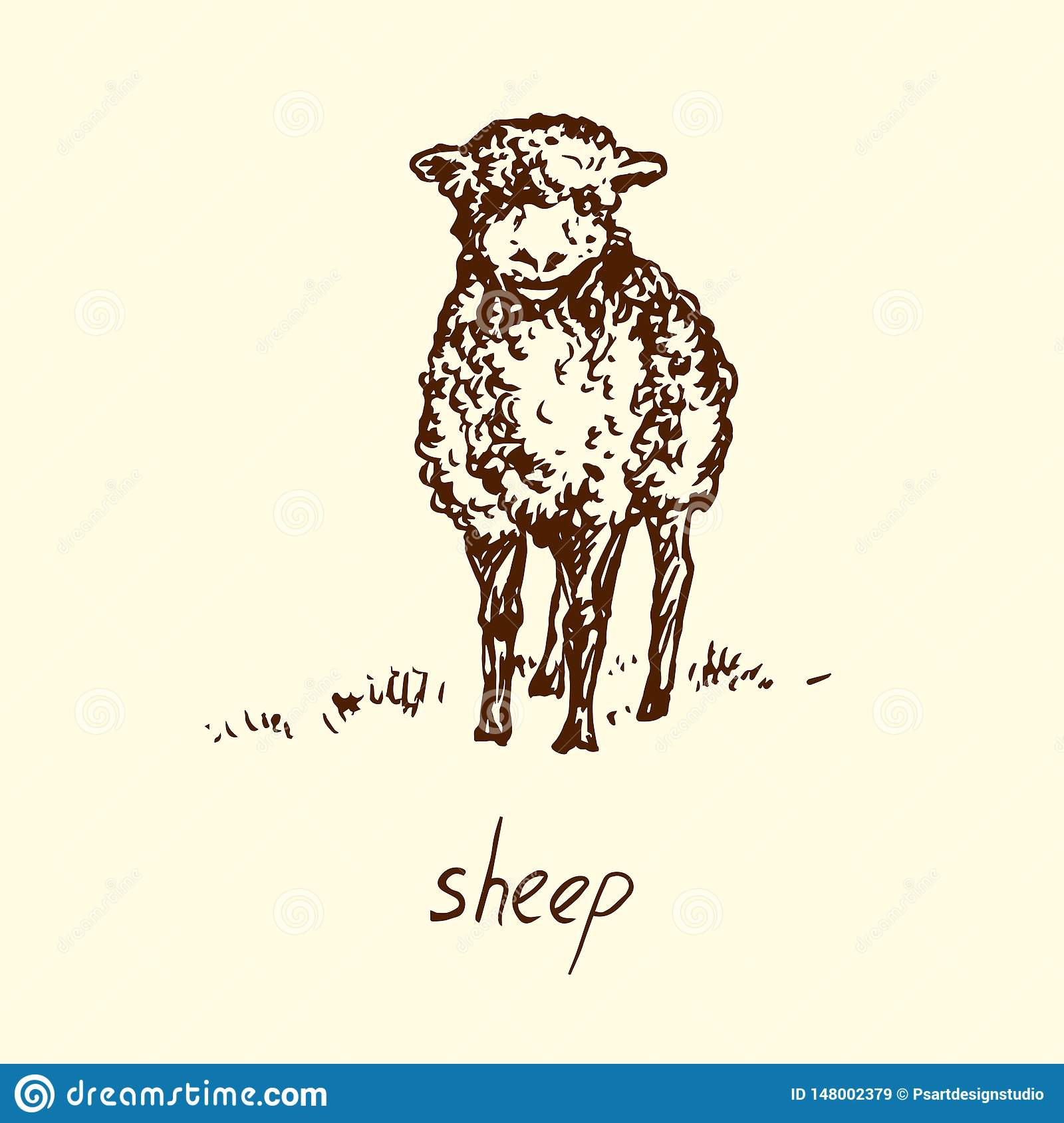 Sheep Standing Front View Hand Drawn Doodle Sketch