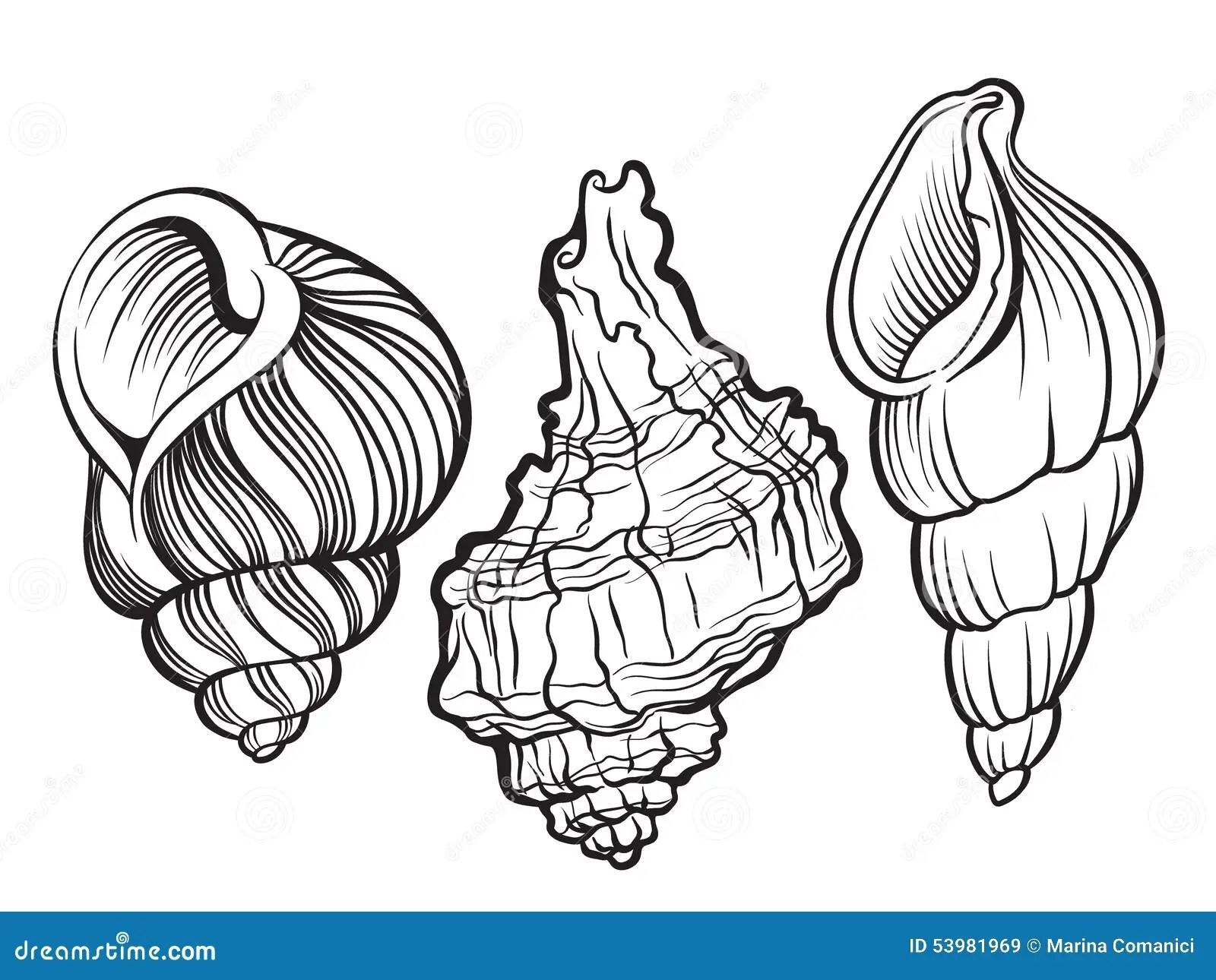 Shells Stock Vector Illustration Of Shape Backgrounds