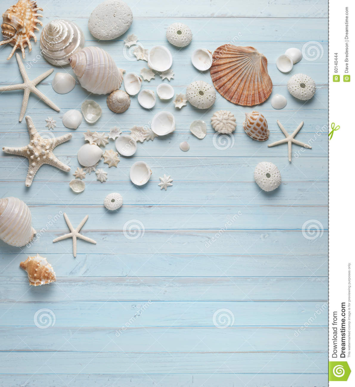 Shells Blue Wood Background Stock Photo Image 60140444