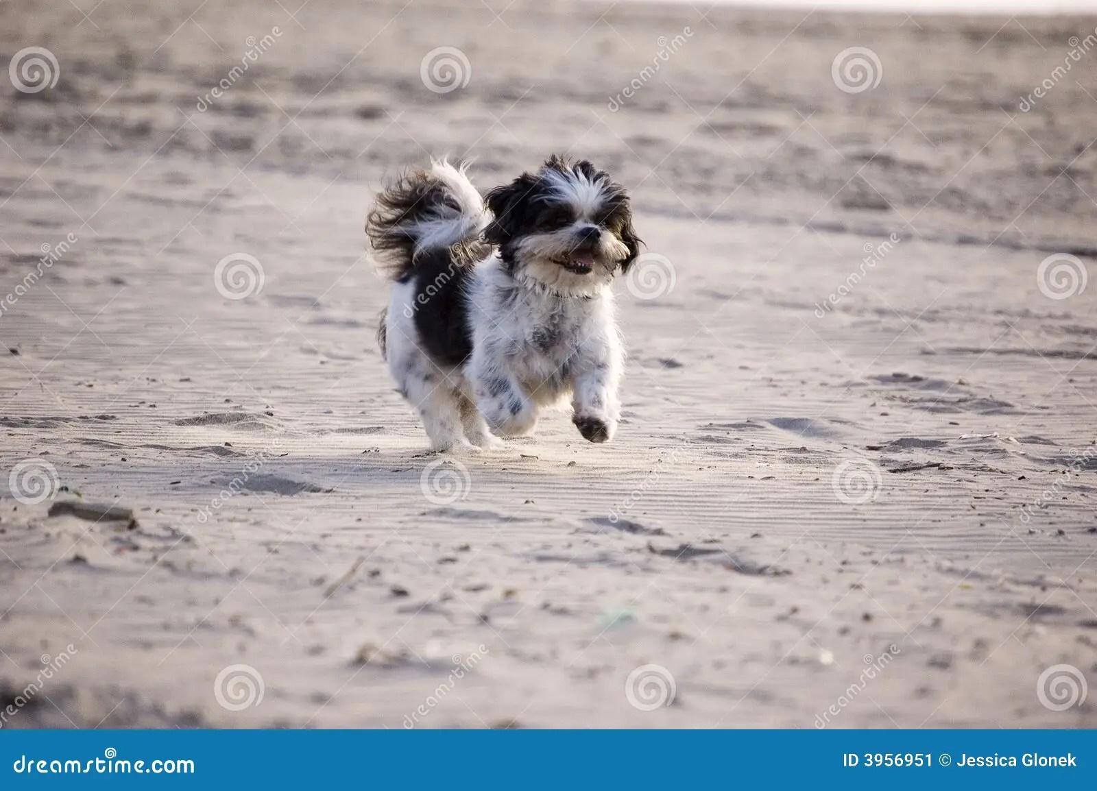 Owner Running Tzu Shih