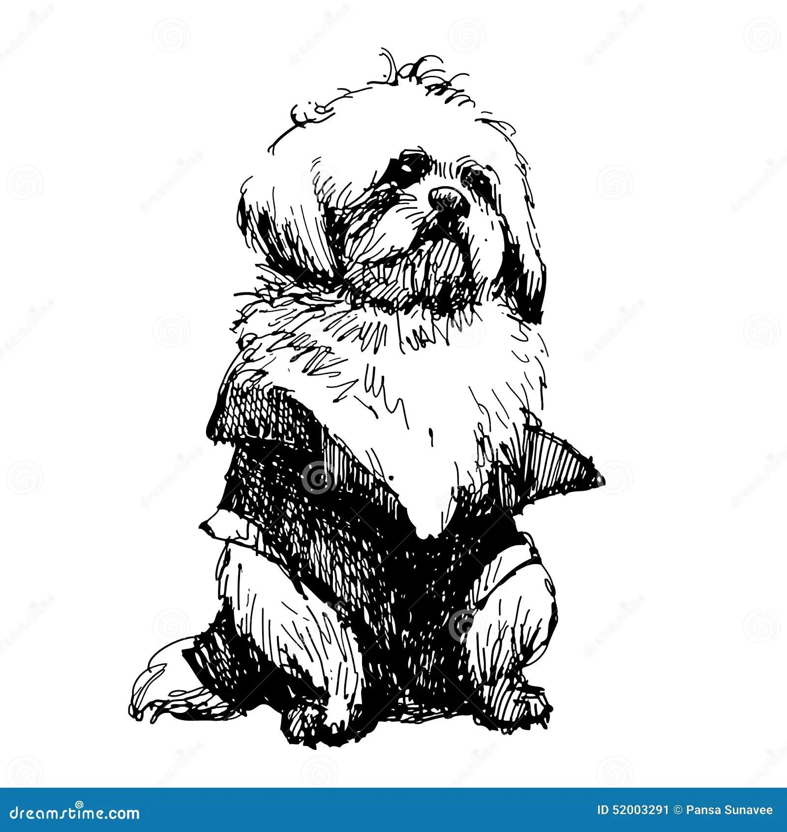 Shih Tzu Stock Vector Illustration Of Obe Nt Breed