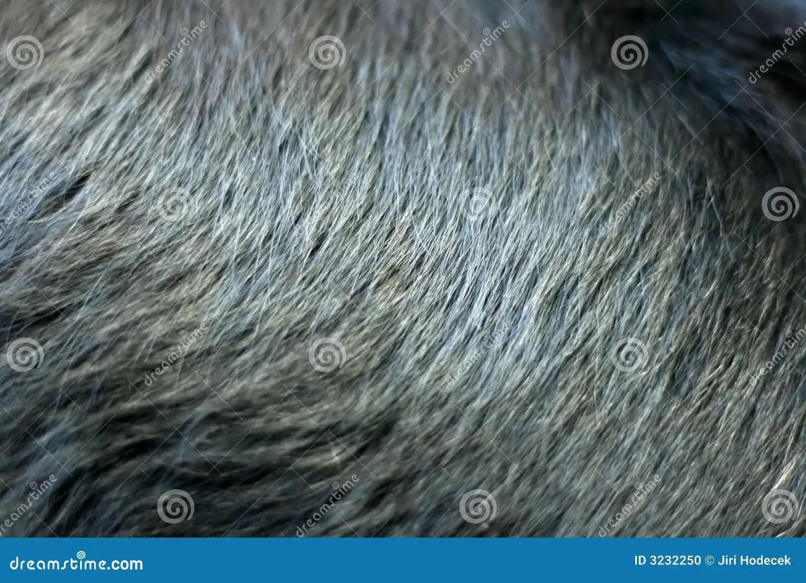 Shiny black fur of dog stock photo Image of background
