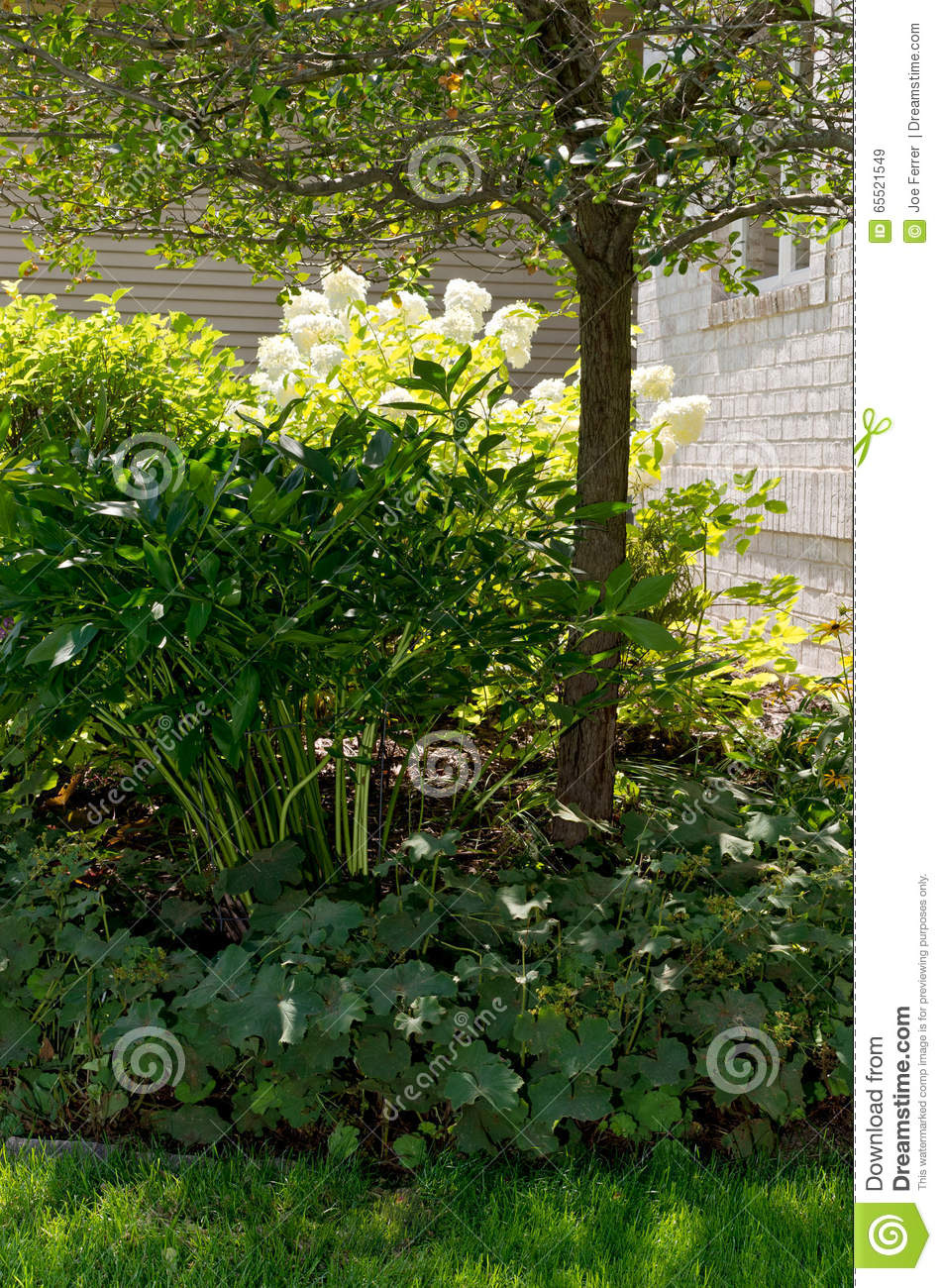 Shrubs And Tree In Front Yard Stock Photo
