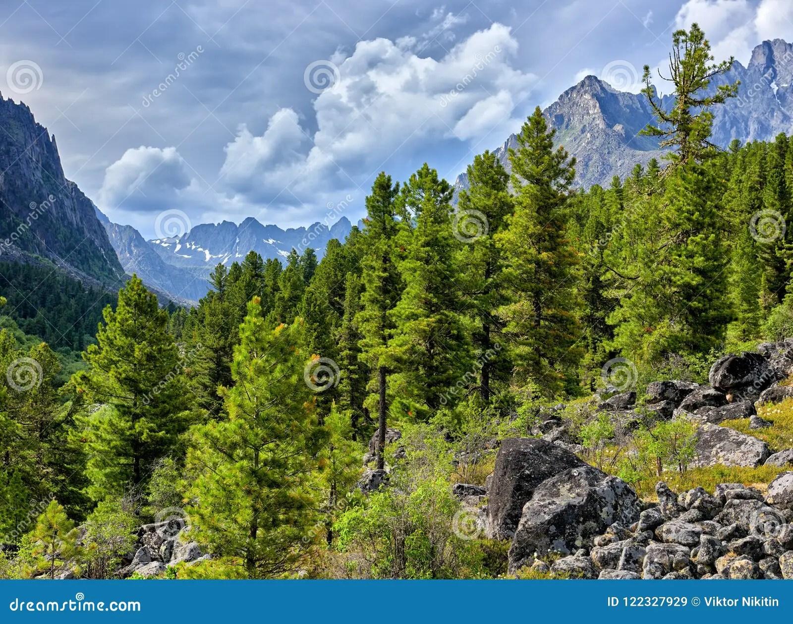 siberian mountain taiga on