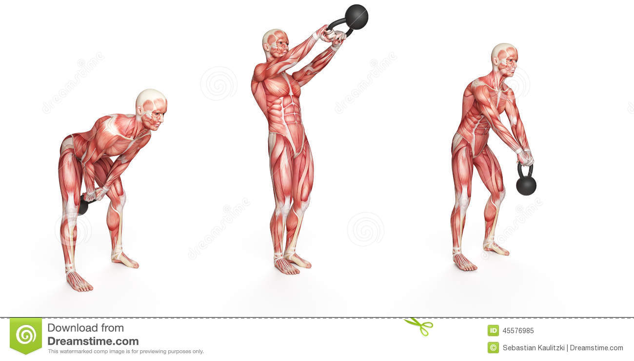 human skeleton and muscles diagram single door access control wiring side step swing stock illustration - image: 45576985